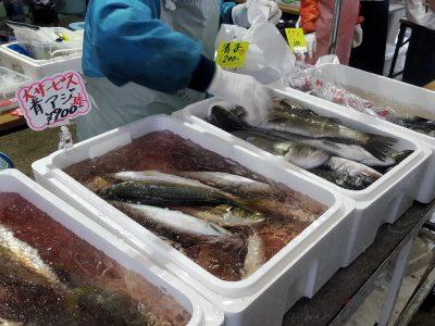 船橋漁港の朝市では、魚も販売